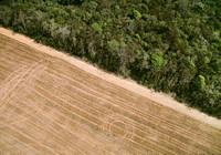 Primary forest vs agriculture, Brazil